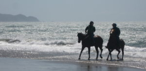 horse in surf
